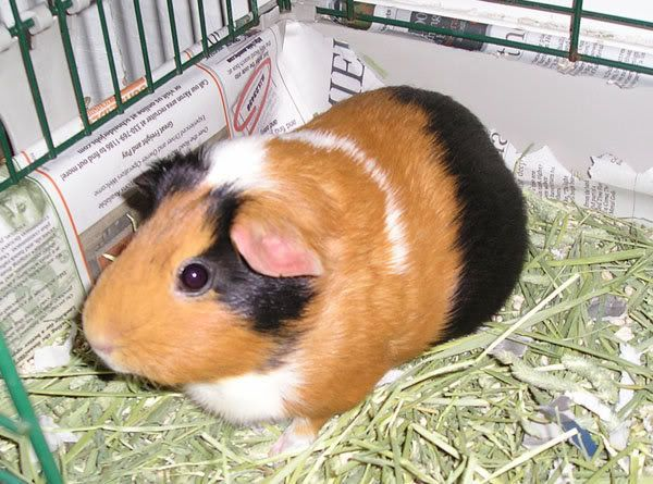 My Piggies N54802924_31023892_4208