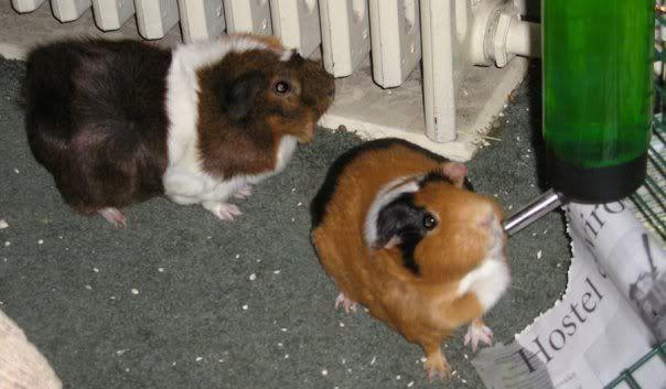 My Piggies N54802924_31023902_3619