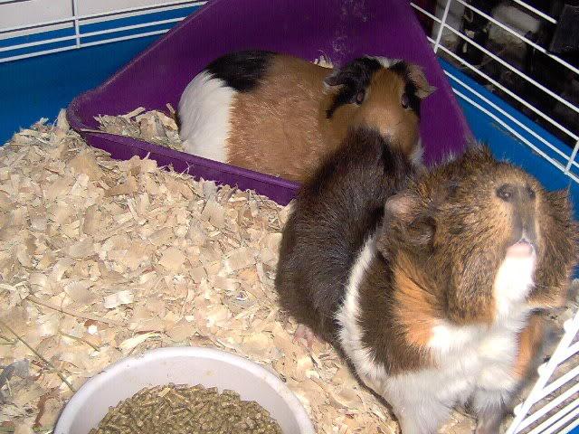 updated piggie pics Picture030