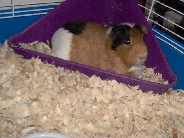 updated piggie pics Picture032