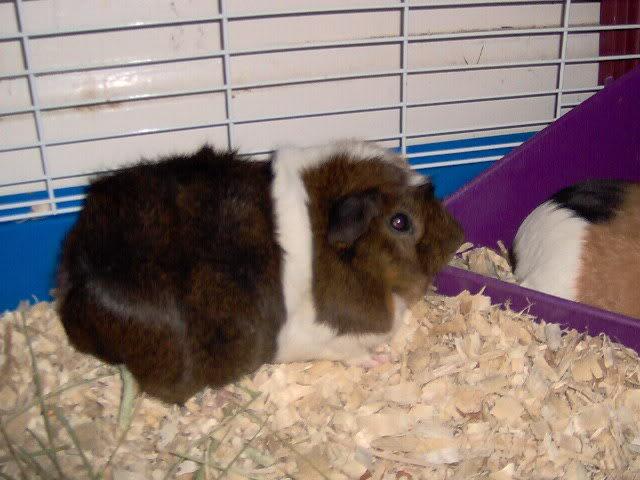 updated piggie pics Picture033