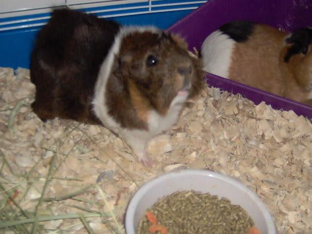updated piggie pics Picture034