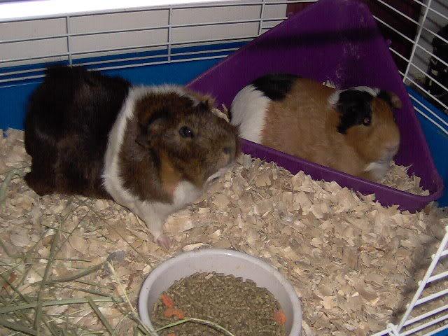 updated piggie pics Picture035