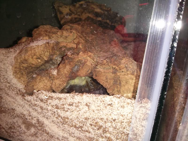 [Discussion] Parabuthus spp. - Page 26 IMG_20140520_175216