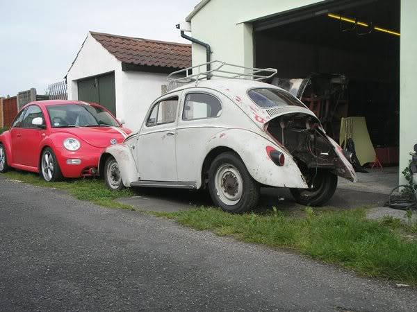 Bella - 1958 Australian Beetle 72146775