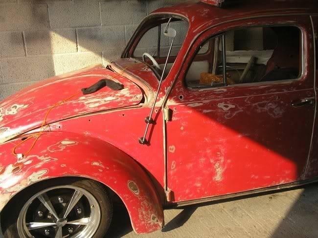 Bella - 1958 Australian Beetle P1010039qw