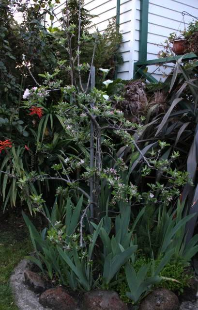 How Important is Attractiveness to Your Garden, on a scale of one to ten 2010_10_04_0761