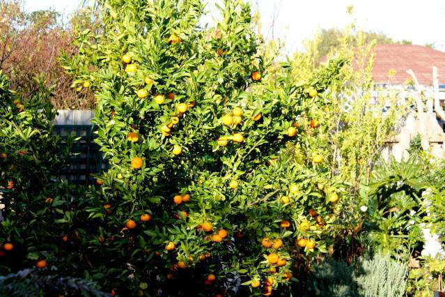 How Important is Attractiveness to Your Garden, on a scale of one to ten IMG_0170