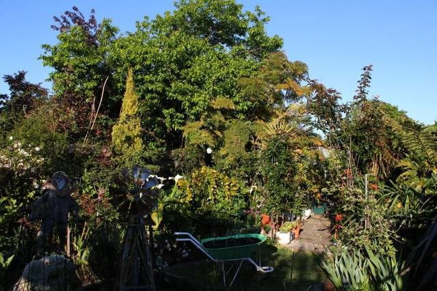 How Important is Attractiveness to Your Garden, on a scale of one to ten 2010_10_02_0703