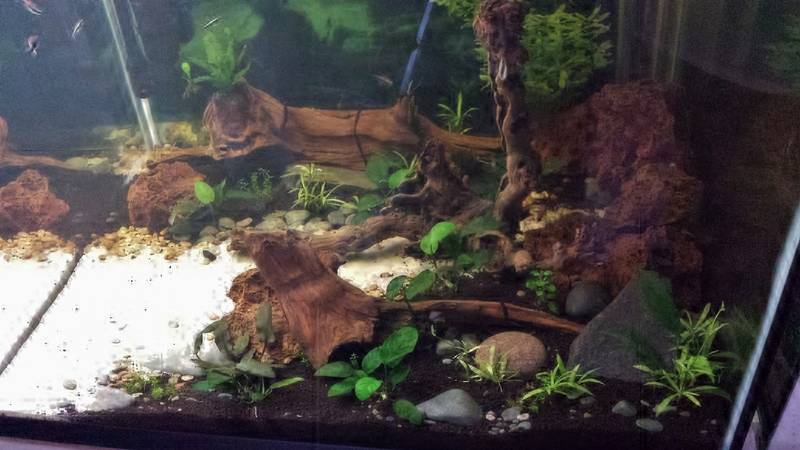My 150 gallon project... - Page 2 20170312_143634%202