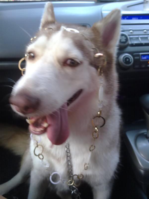 Comedic Husky Picture Thread 07112009032