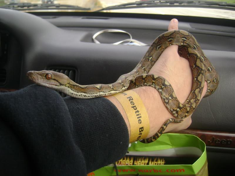 Got a new snake DSC07660