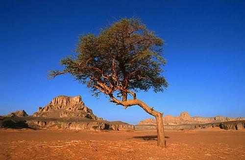 جولة في بلدى الجزائر 042