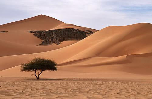 جولة في بلدى الجزائر 146