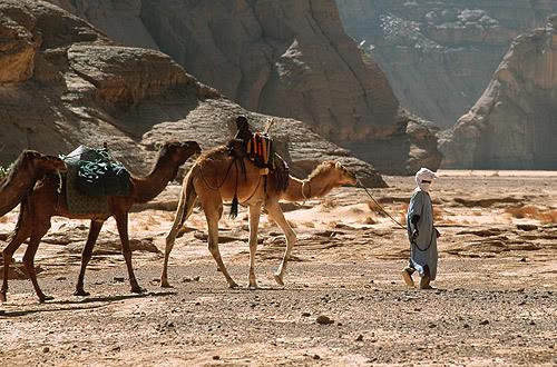 جولة في بلدى الجزائر