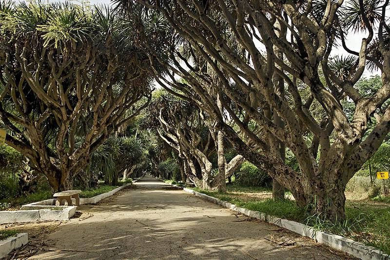 من اجمل الحدائق في الجزائر Dz18