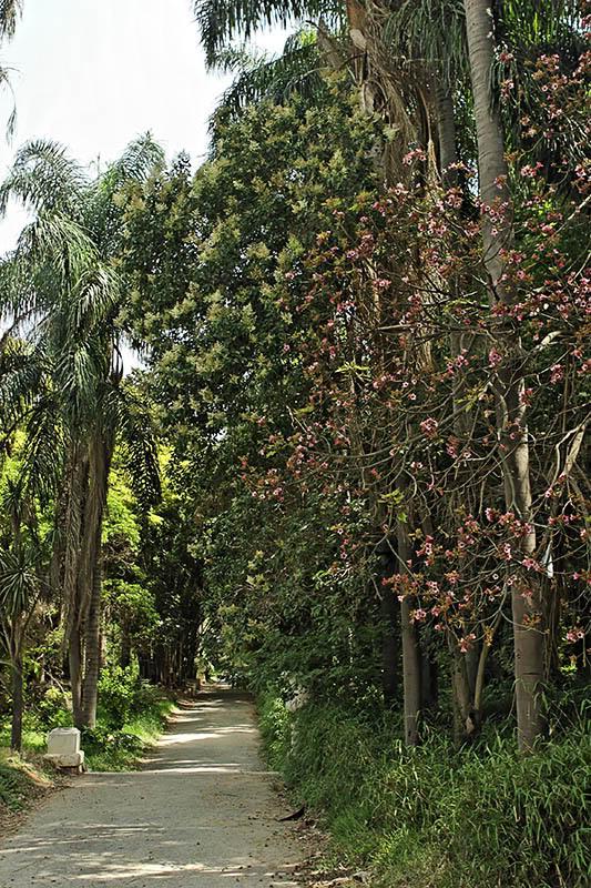 من اجمل الحدائق في الجزائر Dz23