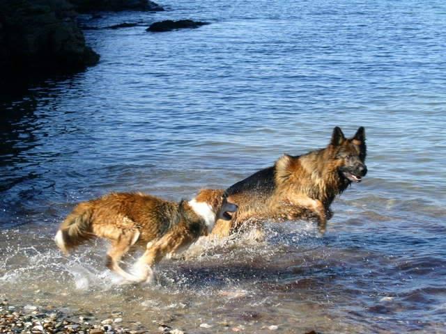 LCGSD Calendar - May 2009 Theme - Beach/Water Pics Devon111