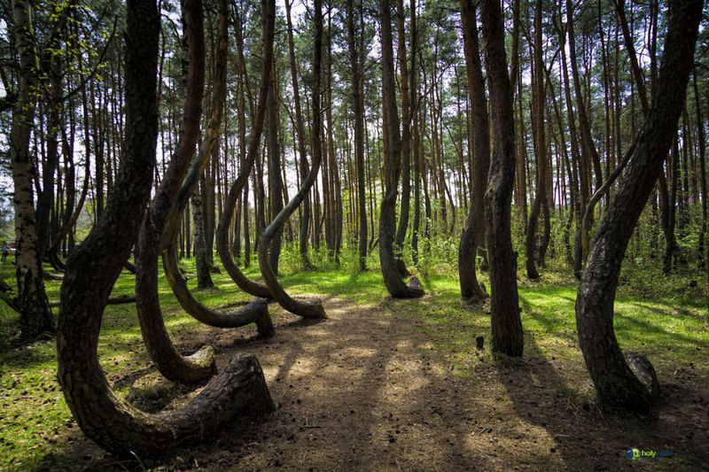 Images et vidéos marines - Page 4 Beautiful-mysterious-forests-wcth17