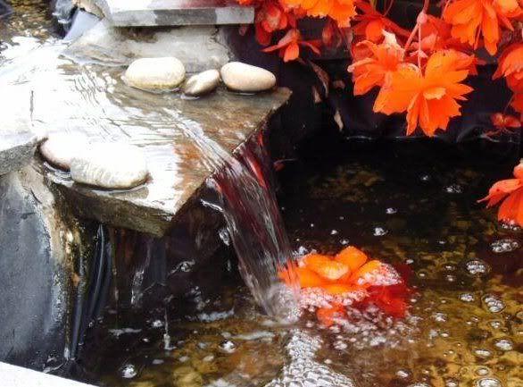 Jardin japonais Image4-1