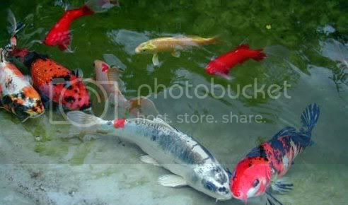 Jardin japonais Image5-1