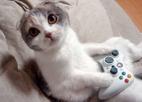 Mačke (hrana za mačke, najdraža pasmina mačaka, držanje mačke, kastriranje, slike mačaka..) Japanesecat3601
