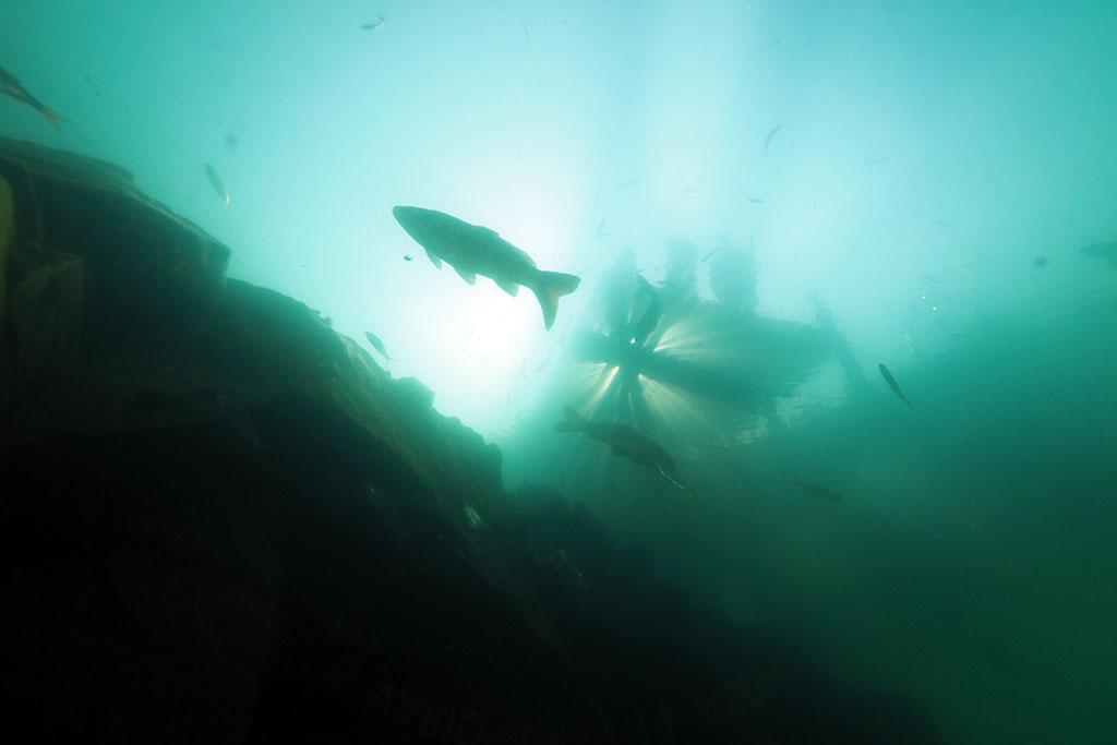 de retour dans nos eaux vertes Rouse05_zpse44aa5fd