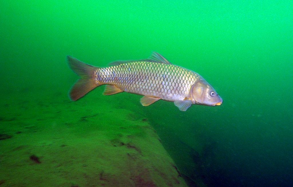 de retour dans nos eaux vertes Rouse15_zpsfa0c2056