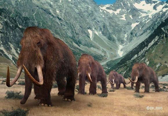 أكبر موسوعة صور متنوعة عن حيوانات منقرقضة مع التوضيح والشرح Mammoth2