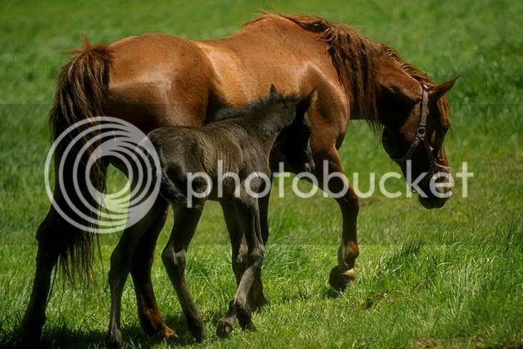 Konji KONJI21