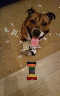 Casper killed wooly... Image.jpg1_zpsiugk3tso