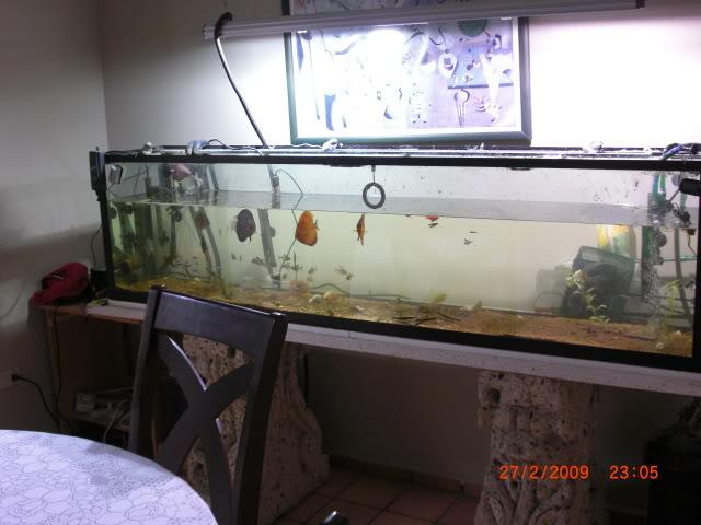 acuario plantado y paludarium con luz natural Monterrey MEXICO. CIMG0013