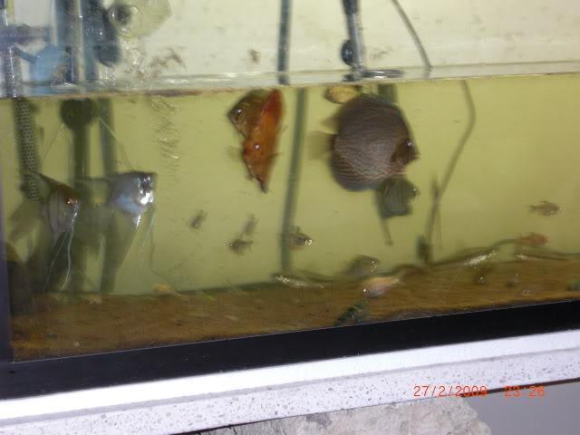 acuario plantado y paludarium con luz natural Monterrey MEXICO. CIMG0016