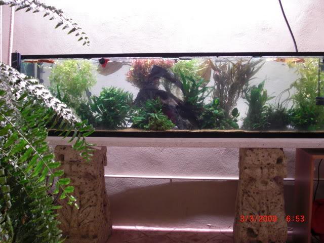 acuario plantado y paludarium con luz natural Monterrey MEXICO. CIMG0021