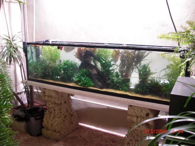 acuario plantado y paludarium con luz natural Monterrey MEXICO. CIMG0024