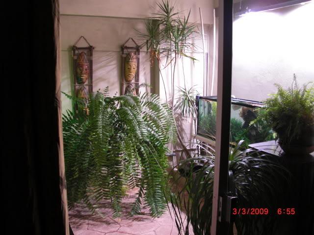 acuario plantado y paludarium con luz natural Monterrey MEXICO. CIMG0026
