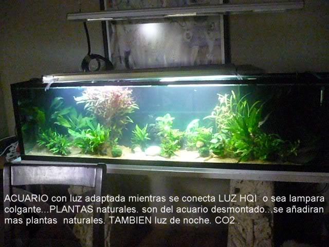 acuario plantado y peces disco YAMONTADO1
