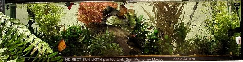 acuario plantado y paludarium con luz natural Monterrey MEXICO. Acuarioplantadoconsol