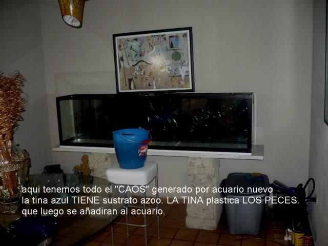 acuario plantado y peces disco Montado2