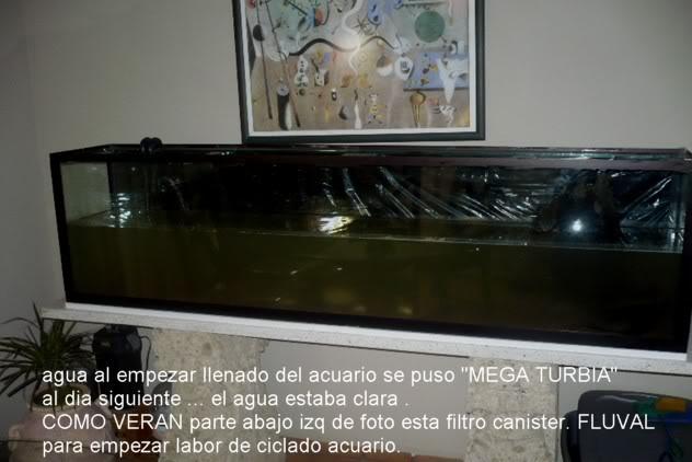 acuario plantado y peces disco Montado5