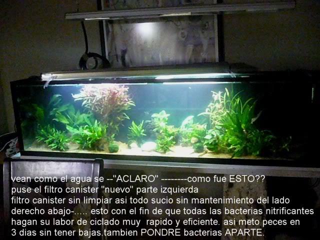 acuario plantado y peces disco Montado6