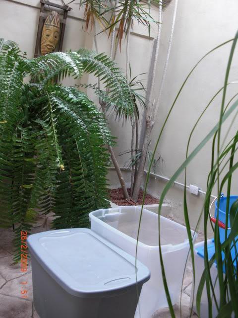 acuario plantado y paludarium con luz natural Monterrey MEXICO. Portal005