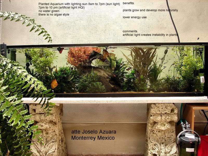 acuario plantado y paludarium con luz natural Monterrey MEXICO. Portalsunligthkkkk
