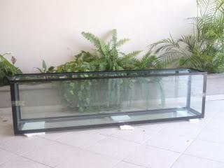acuario plantado y peces disco Proyecto1006