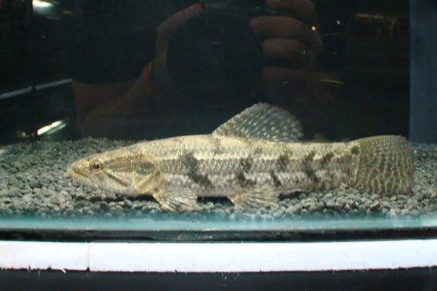 UPDATED !!! , Lapak ikan Arwiniww DSC01063