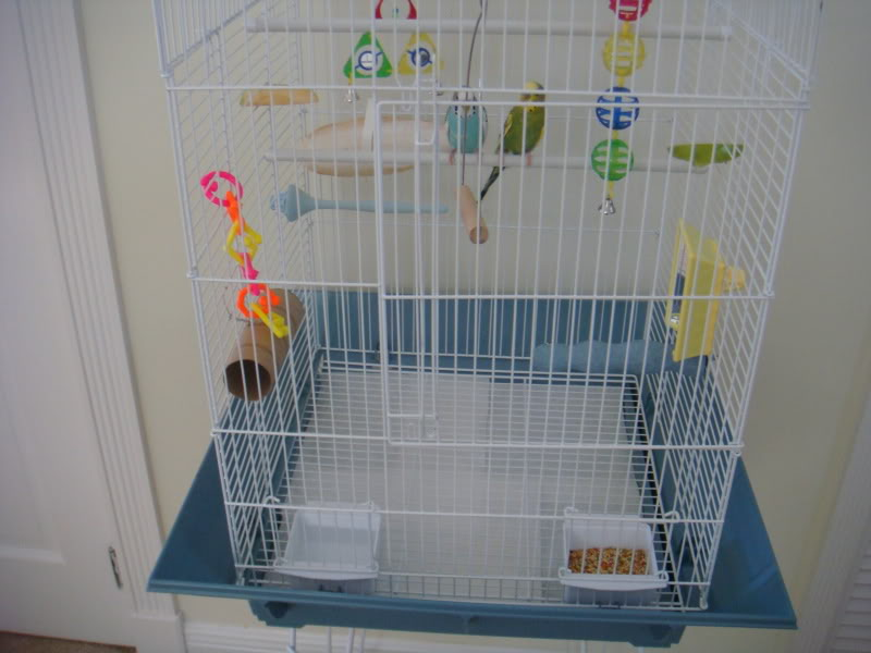 ma cage aujourd'hui ! DSC00482