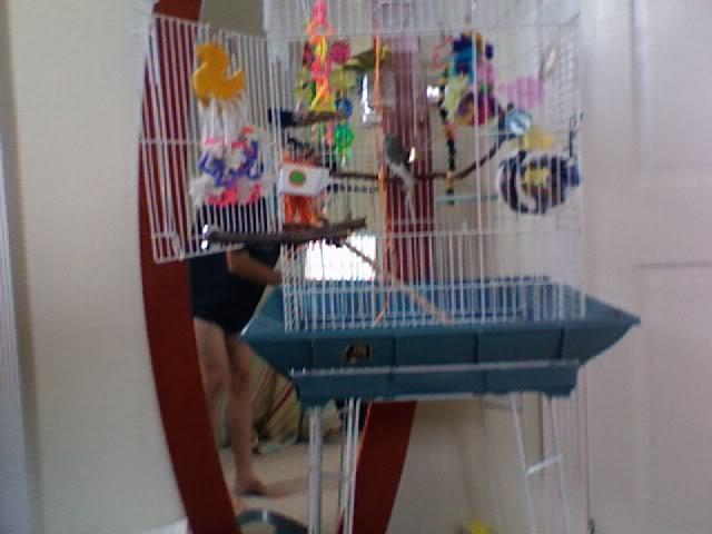 ma cage aujourd'hui ! Photo227-1