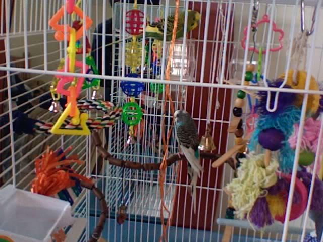 ma cage aujourd'hui ! Photo229