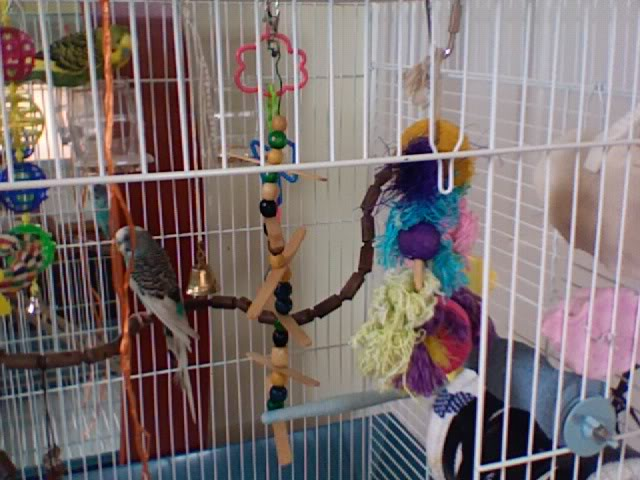ma cage aujourd'hui ! Photo230