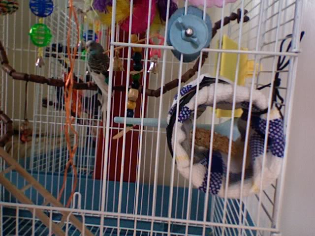 ma cage aujourd'hui ! Photo231